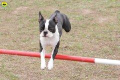 actiondog-29-01-2012-067