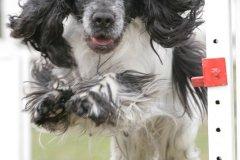 actiondog-29-01-2012-090
