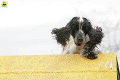 actiondog-29-01-2012-097
