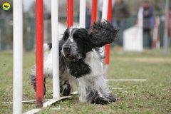 actiondog-29-01-2012-101