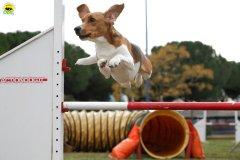 actiondog-29-01-2012-129