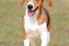 actiondog-29-01-2012-160