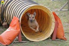 actiondog-29-01-2012-168