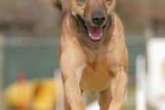 actiondog-29-01-2012-176