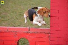 actiondog-29-01-2012-193