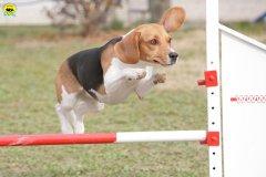 actiondog-29-01-2012-195