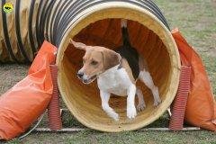 actiondog-29-01-2012-200