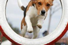 actiondog-29-01-2012-202