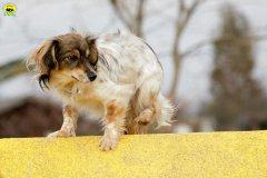 actiondog-29-01-2012-244