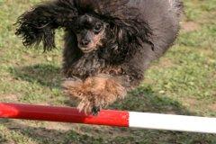 actiondog-29-01-2012-256