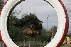 actiondog-29-01-2012-268