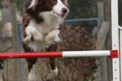 actiondog-29-01-2012-287