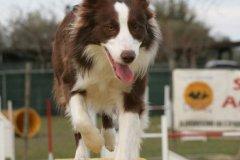 actiondog-29-01-2012-290