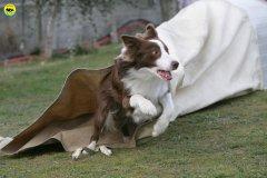 actiondog-29-01-2012-304