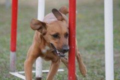 actiondog-29-01-2012-316