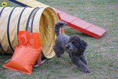 actiondog-29-01-2012-332
