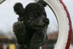 actiondog-29-01-2012-340