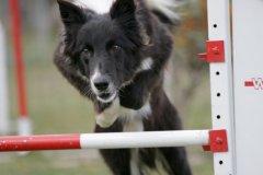 actiondog-29-01-2012-342