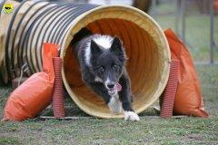actiondog-29-01-2012-344