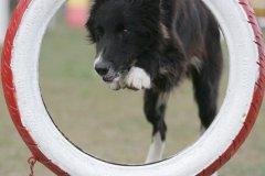 actiondog-29-01-2012-347