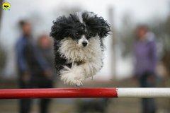 actiondog-29-01-2012-349