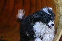 actiondog-29-01-2012-350