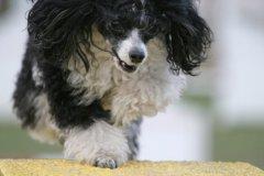actiondog-29-01-2012-352