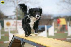 actiondog-29-01-2012-364