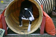 actiondog-29-01-2012-367