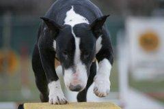 actiondog-29-01-2012-370