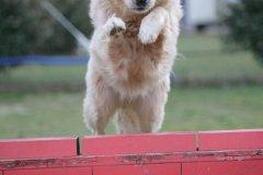 actiondog-29-01-2012-372