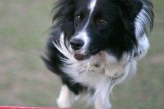 actiondog-29-01-2012-383