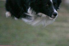 actiondog-29-01-2012-389