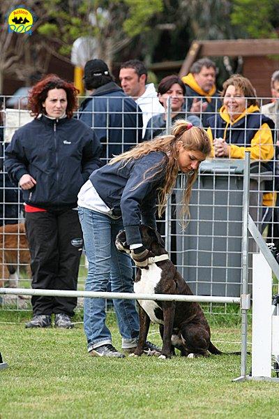 006-agility-dog-cecina-11-04-10