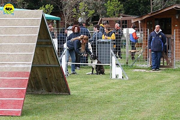 008-agility-dog-cecina-11-04-10