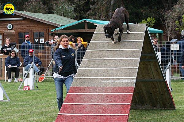 009-agility-dog-cecina-11-04-10
