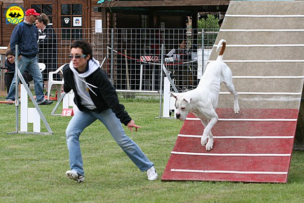 014-agility-dog-cecina-11-04-10