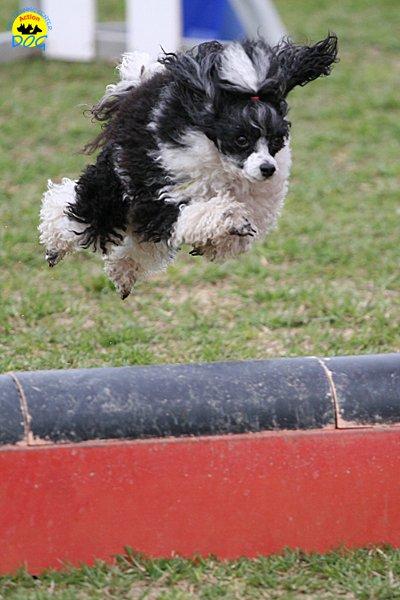 021-agility-dog-cecina-11-04-10