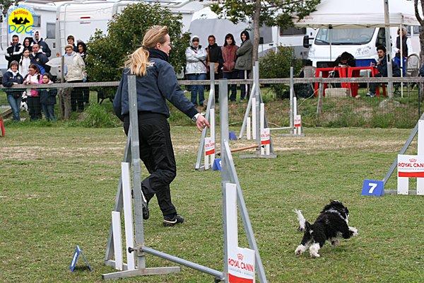 024-agility-dog-cecina-11-04-10