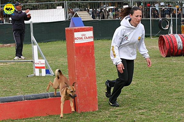 042-agility-dog-cecina-11-04-10