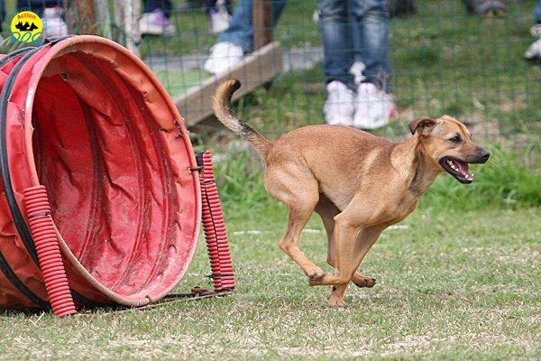044-agility-dog-cecina-11-04-10