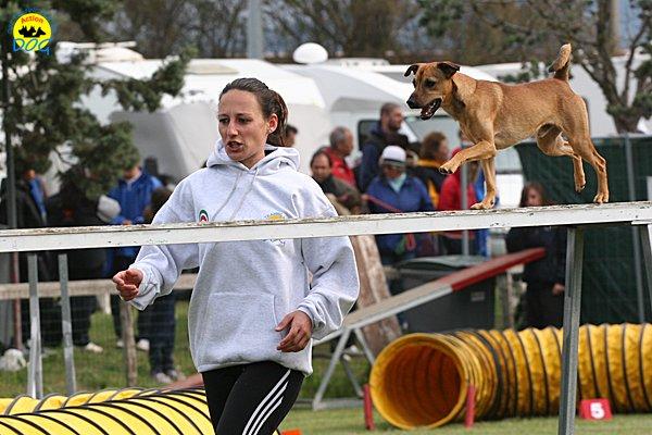 085-agility-dog-cecina-11-04-10
