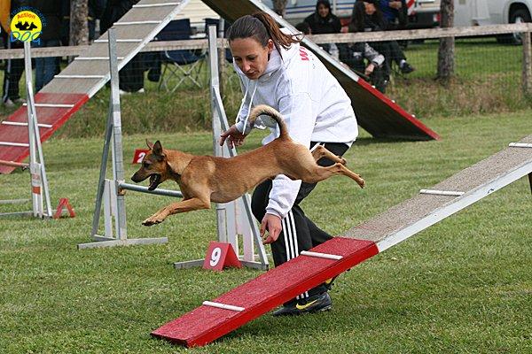 088-agility-dog-cecina-11-04-10