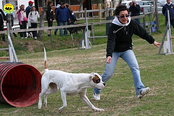 095-agility-dog-cecina-11-04-10