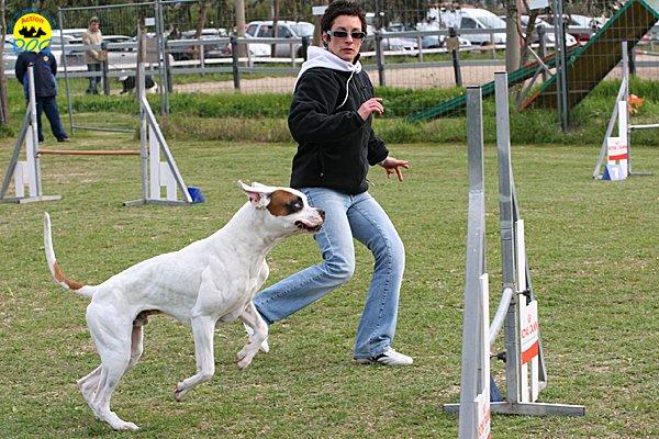 096-agility-dog-cecina-11-04-10