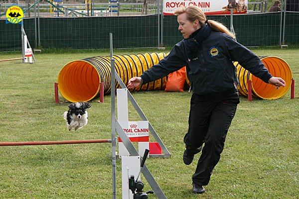 126-agility-dog-cecina-11-04-10