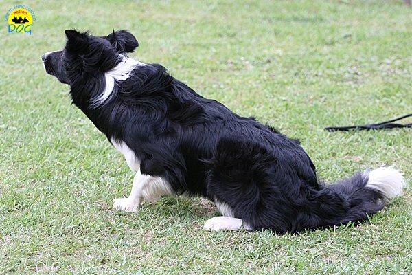203-agility-dog-cecina-11-04-10