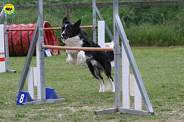 212-agility-dog-cecina-11-04-10