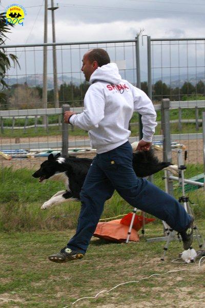213-agility-dog-cecina-11-04-10