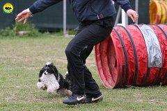 018-agility-dog-cecina-11-04-10